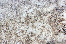 Galaxy Bordeaux Granite